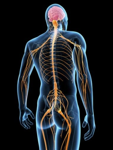Chiropractic Care - Neuromuscular systems